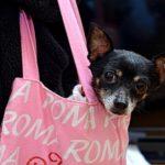 Hunderucksack für kleine Hunde