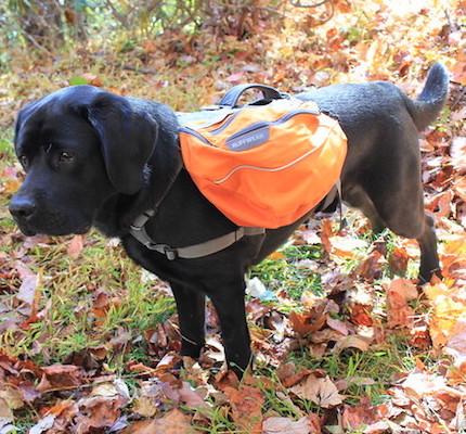 Rucksack-für-den-Hund